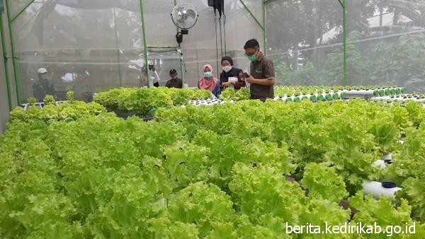 Jaminan Mutu Produk Pertanian dengan Sertifikasi Prima