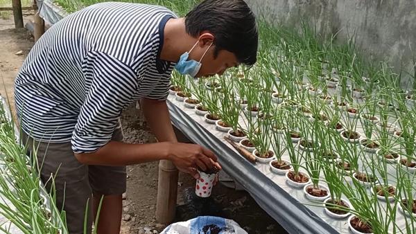 Manfaatkan WFH Untuk Bertani Hidroponik