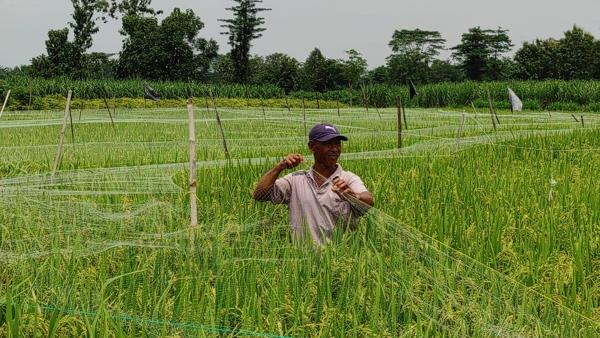 Sekelompok Petani di Wilayah Gurah Terpikat Pertanian Organik