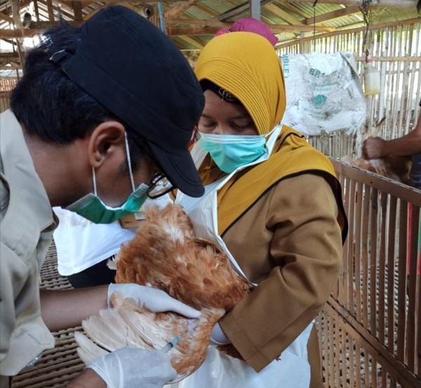 Cegah Penyakit Tetelo, DKPP Bantu 225 Ribu Vaksin ND